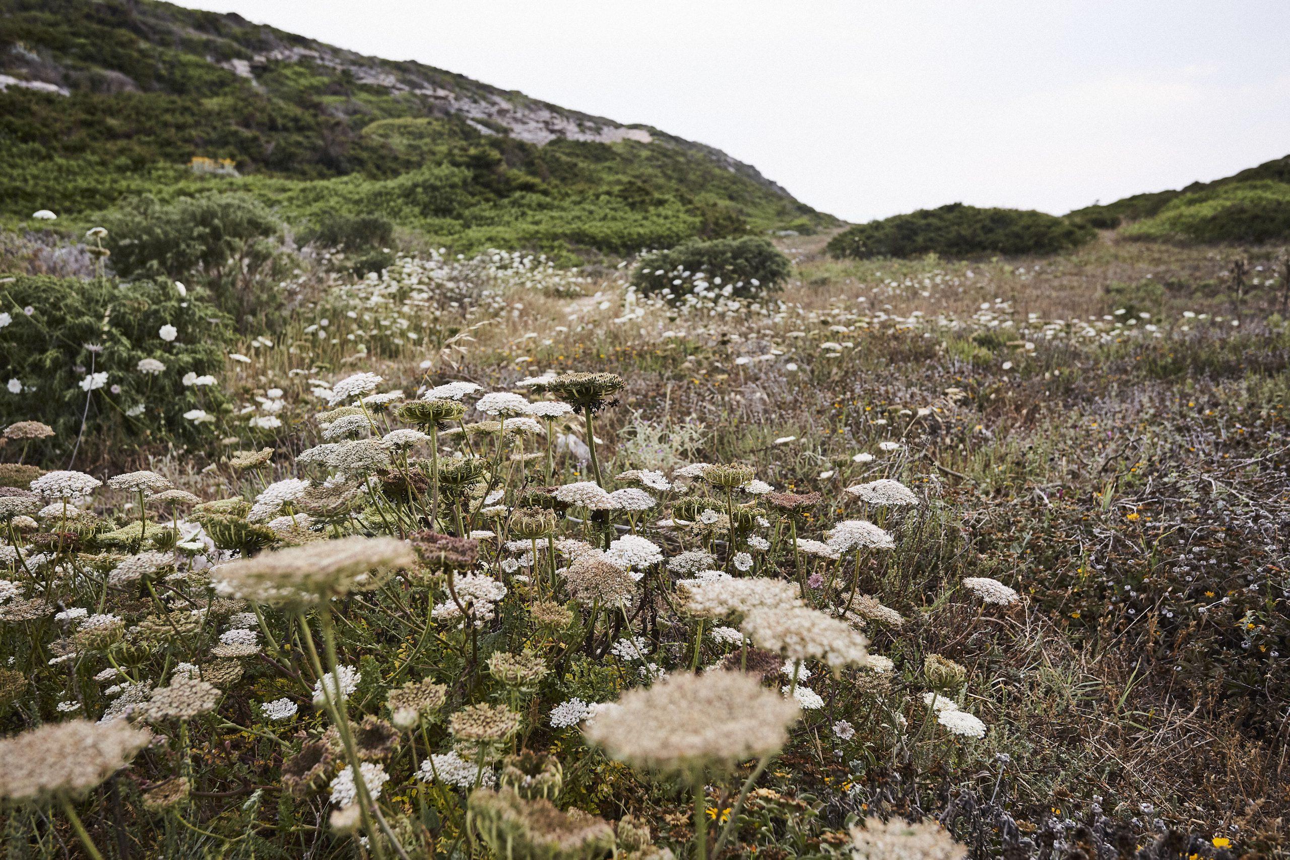 Corsica_0619_0P4A8340